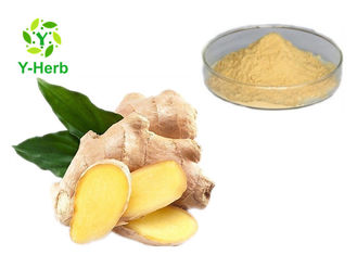 Bulk Gingerol Powder Zingiber Officinale Ginger Root Juice Extract